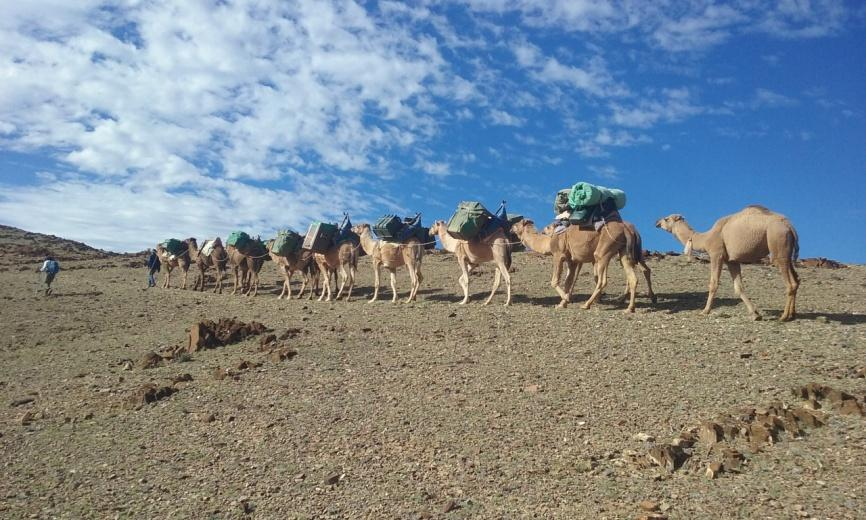 Camel train in Flinders Ranges