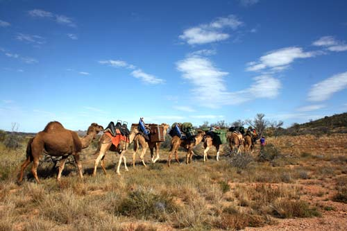 Australian Camel Train Tour